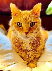 West Midlands Cat Sitting Service